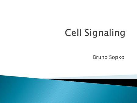 Bruno Sopko.  Signal Transduction Pathways  Organization  Signals  Receptors ◦ Soluble Receptors ◦ Transmembrane Receptors  Enzyme Coupled Receptors.
