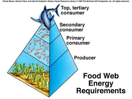 Food chain- simple model that shows how matter and energy move through an ecosystem Note: The arrow points at the EATER, not what is eaten.