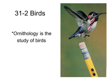 31-2 Birds *Ornithology is the study of birds. Characteristics 1. Forelimbs modified into wings 2. Feathers 3. Hollow, lightweight bones 4. Endothermic.