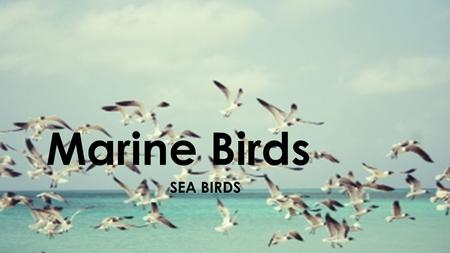 Marine Birds SEA BIRDS. Diet  Seabirds evolved to exploit different food resources in the world's seas and oceans, and to a great extent, their physiology.