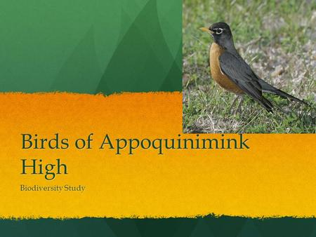 Birds of Appoquinimink High Biodiversity Study. American Robin