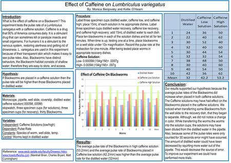 Effect of Caffeine on Lumbriculus variegatus By: Monica Benjovsky and Kellie O'Hearn Introduction: What is the effect of caffeine on a Blackworm? This.