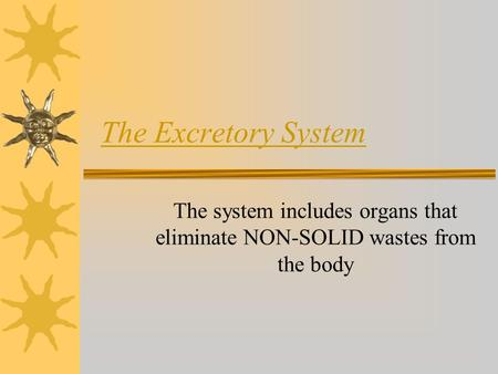 The Excretory System The system includes organs that eliminate NON-SOLID wastes from the body.