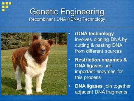 Genetic Engineering Recombinant DNA (rDNA) Technology rDNA technology involves cloning DNA by cutting & pasting DNA from different sources Restriction.
