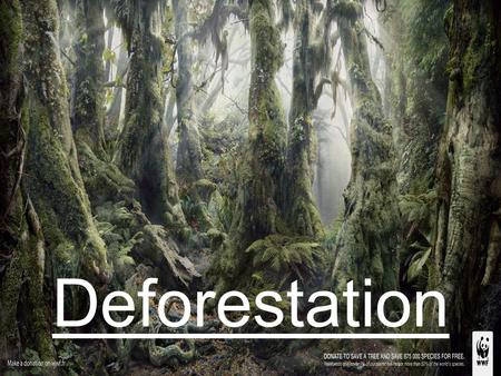 Deforestation. In many parts of the world (for example, in the tropical forests of South America and Africa) deforestation occurs in high quantities.