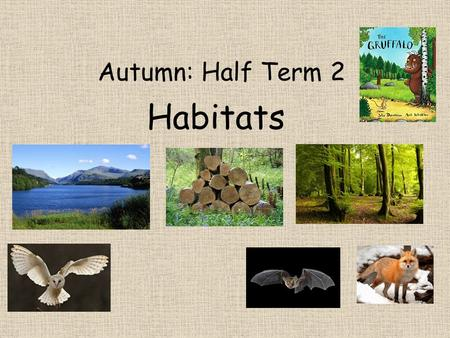Autumn: Half Term 2 Habitats. Literacy We will be learning the story of the Gruffalo and using this to help us with our own descriptive writing. We will.