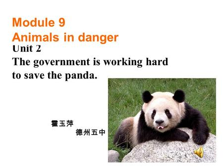 Unit 2 The government is working hard to save the panda. Module 9 Animals in danger 霍玉萍 德州五中.