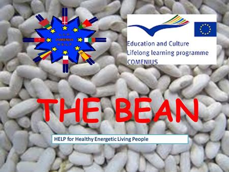 THE BEAN. 1.Why are the vegetables important? All vegetables have well-balanced contents of carbohydrates and proteins and represent an important source.