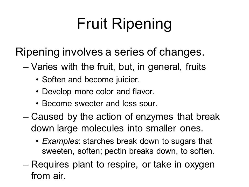 Fruit Ripening Some fruits cannot ripen after they are picked, or harvested.