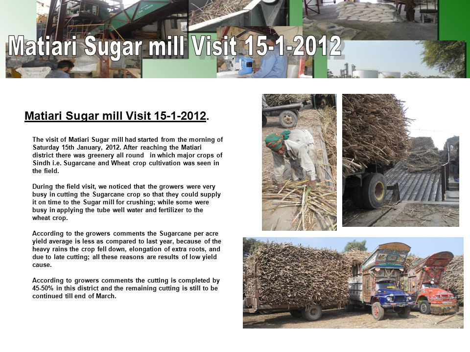 Important factors affecting the low yield of Sugarcane crop.