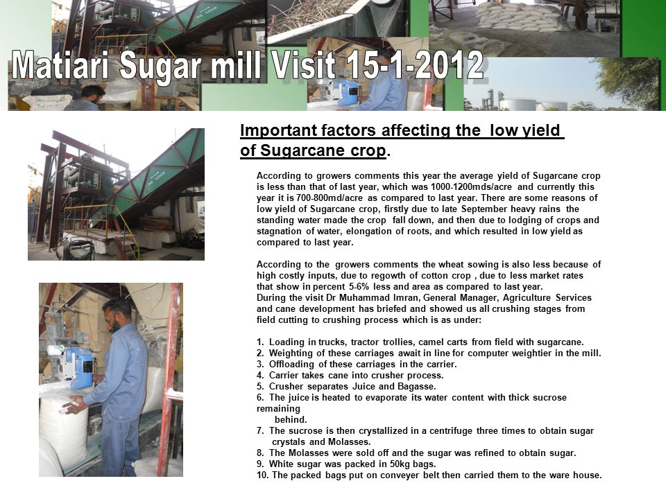 All these stages have been seen in the field and Sugar mill Matiari.