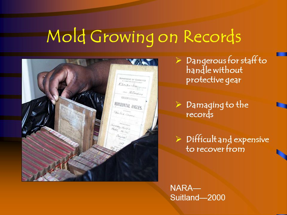 Small Outbreaks of Mold