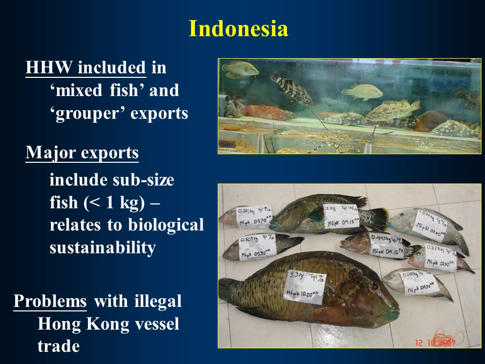 Philippines – HHW export illegal/poaching