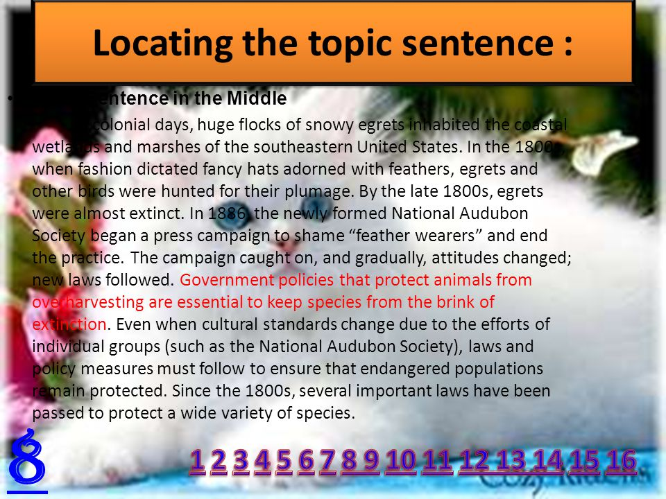 Topic Sentence in the Middle In colonial days, huge flocks of snowy egrets inhabited the coastal wetlands and marshes of the southeastern United States.