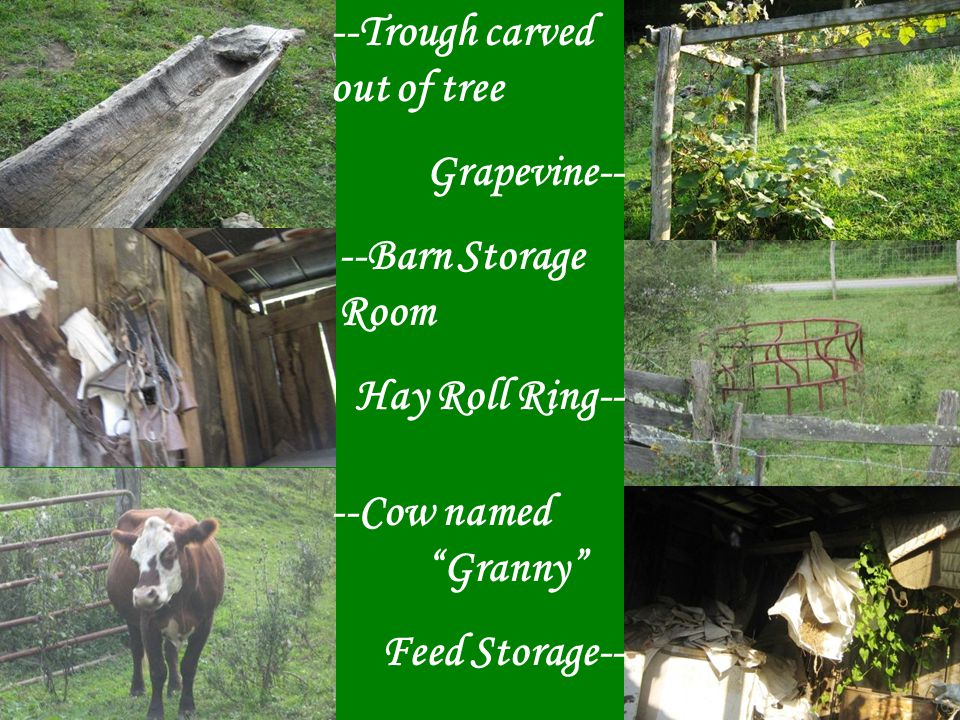 Trough Cattle Chute Corn Crib Inside Corn Crib
