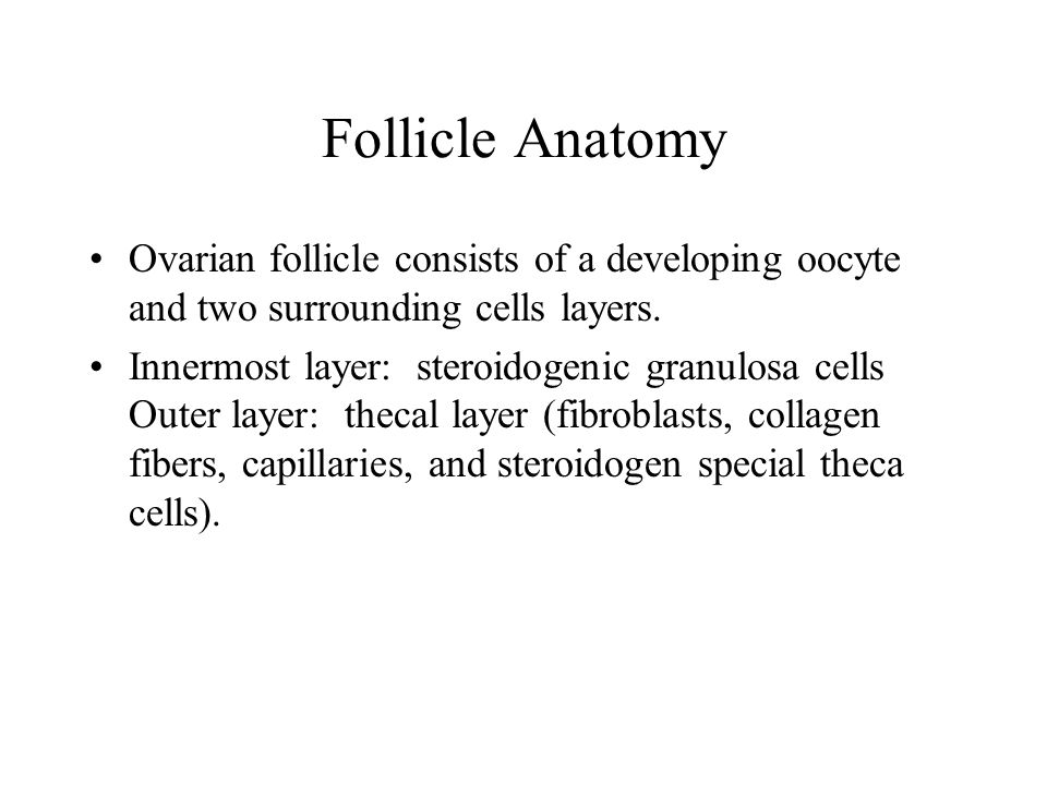 Diagrammatic representation of the follicle and oocyte during early vitellogenesis Nagahama, 1983
