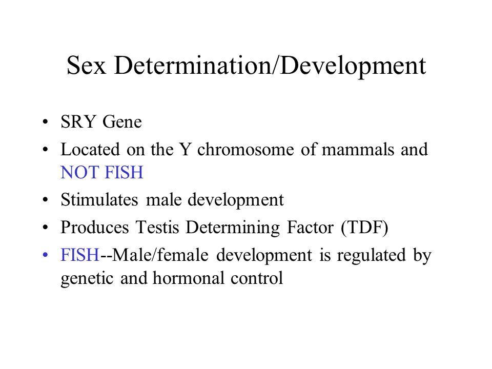 Sex Determination/Development Development of the gonads, reproductive tract and external phenotype a.