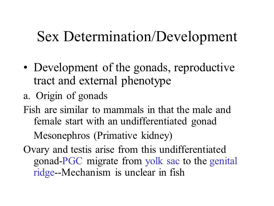 Sex Determination/Development b) Origin of reproductive tract Two duct system Mullerian ducts--female reproductive tract- oviducts, uterus, cervix and vagina Wolffian ducts--male reproductive tract- epididymis, vas deferens, seminal vessicles FISH--tubular extension of the gonad