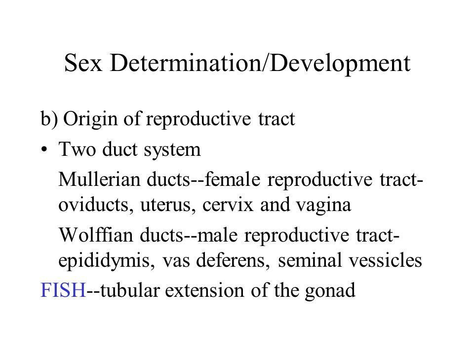 Mechanisms of Sex Determination II.
