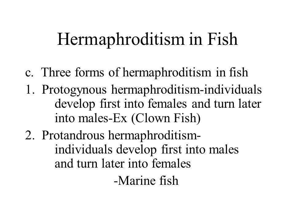 Hermaphroditism in Fish 3.