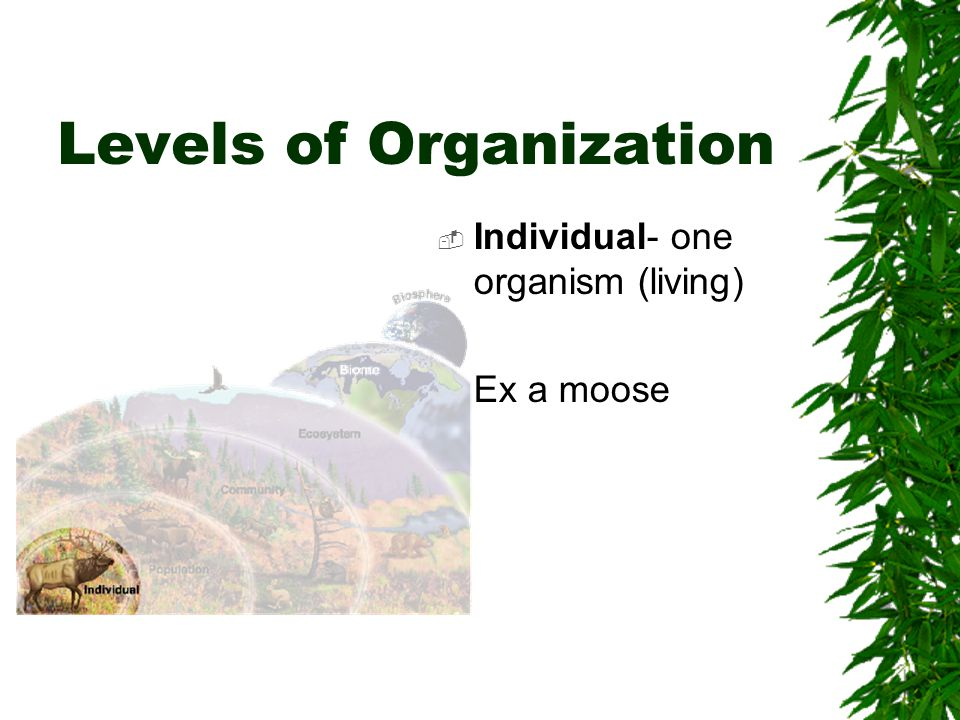 Levels of Organization  Population- groups of individuals that belong to the species and live in the same area.