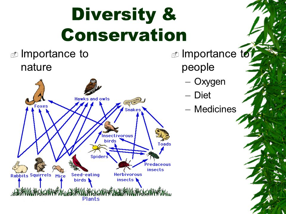 Loss of Diversity  Threatened Species  Endangered Species  Extinction of Species