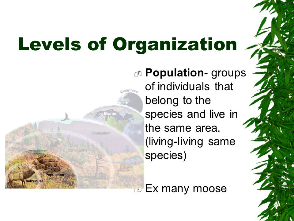Levels of Organization  Community- groups of different populations (more than one population or different groups of species) Ex many groups of moose beavers, trees, grass (all living)