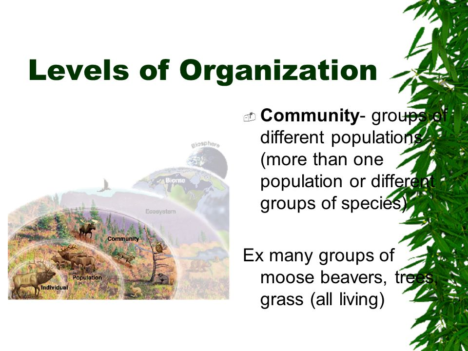 Levels of Organization  Ecosystem- all organisms in a particular area along with the nonliving.