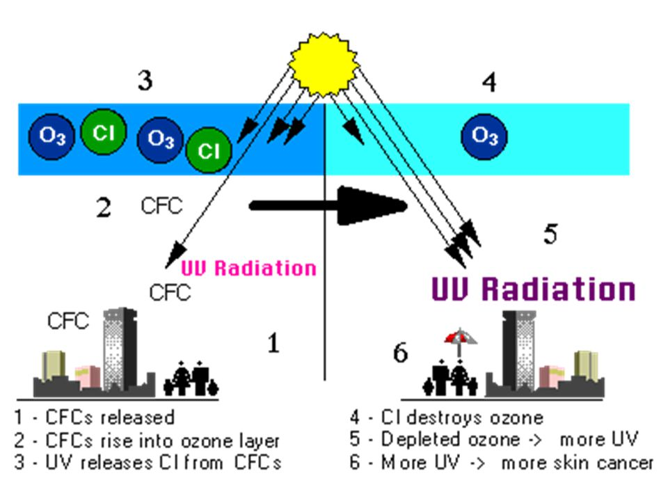 Humans & The Environment  Acid Precipitation –In the form of rain, snow, dew or fog –Created when gases such as nitrogen oxide (NOx) and sulfur oxide (SOx), generated in the burning of fossil fuels such as coal and oil, react in the atmosphere with sunlight to produce acids such as nitric and sulfuric acid.