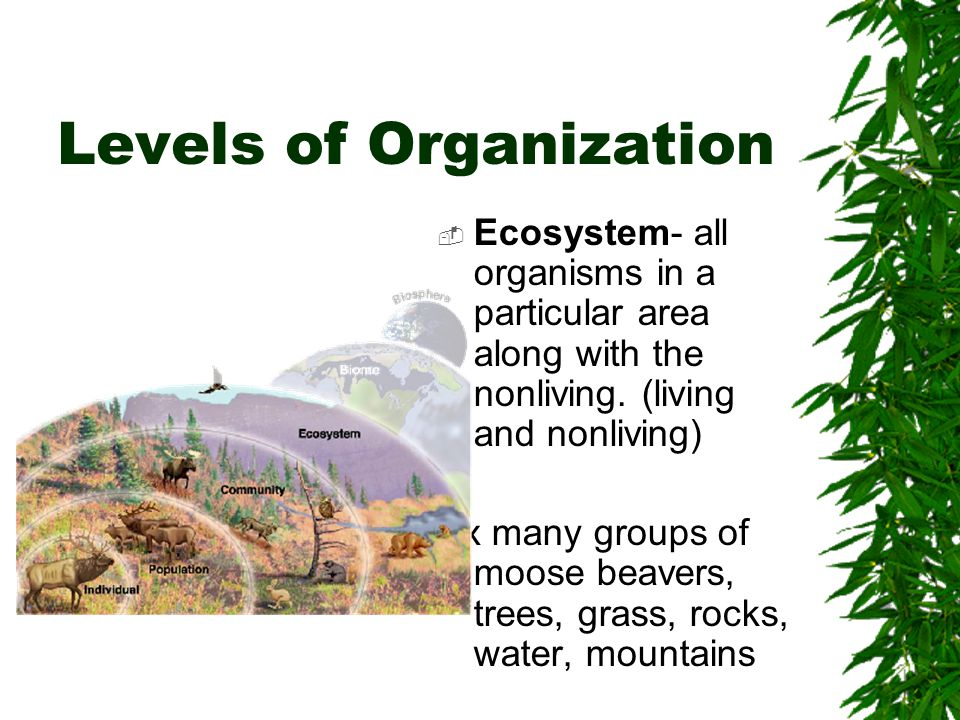 Levels of Organization  Biome- group of ecosystems that have the same climate and similar dominant communities  Biomes: tropical rain forest, tropical dry forest, tropical savannah, temperate grassland, desert, temperate woodland and shrubland, temperate forest, northwestern coniferous forest, boreal forest (taiga), tundra, mountains and ice caps