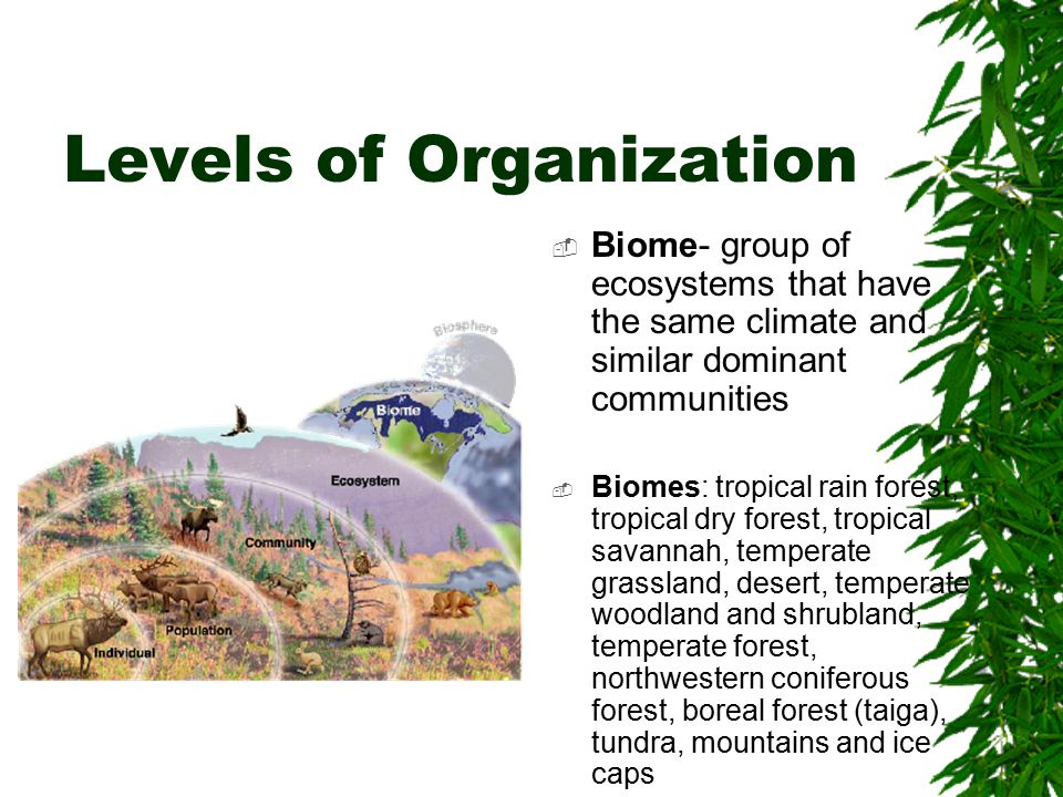 Levels of Organization  Biosphere- all of the planet where life exhists, includes land, water, and, air  Life extends 8 km up and 11 km below the surface