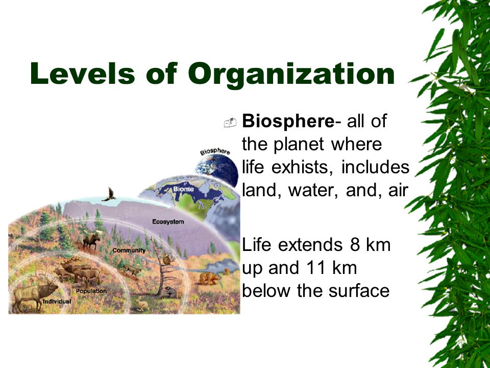 IN AN ECOSYSTEM: Organisms live in a Habitat Organisms fit into a Niche of the environment