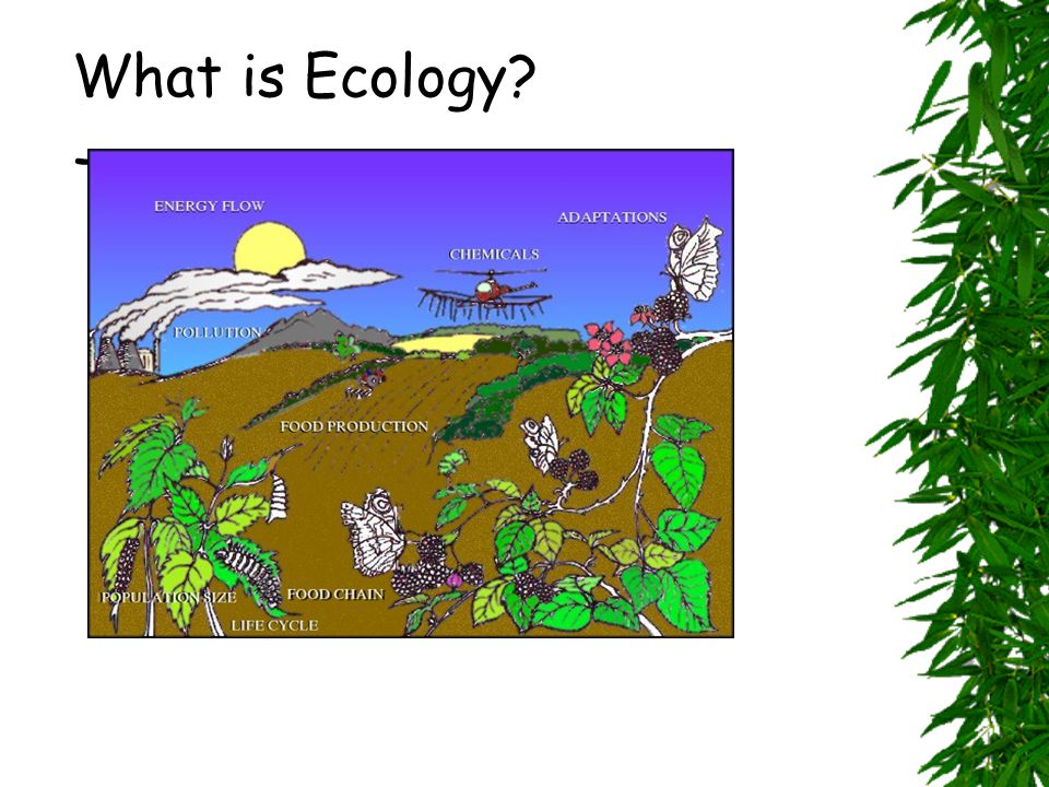  Ecology-  the study of interactions between –organisms and organisms –organisms and their environment