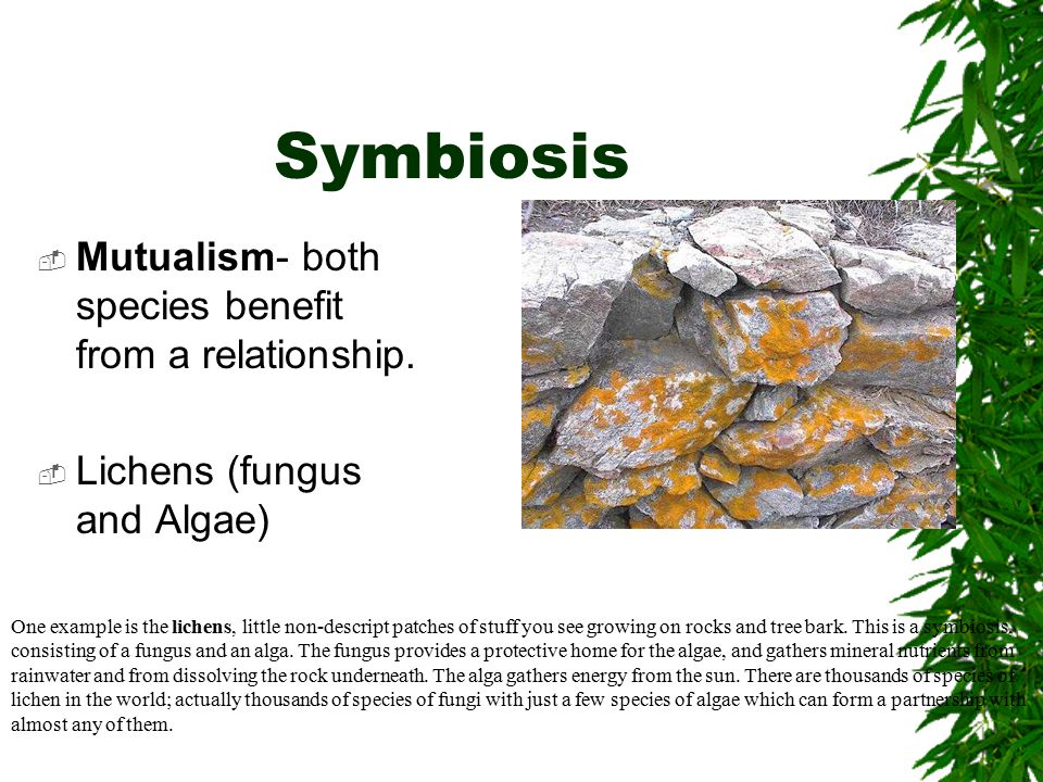 Symbiosis  Commensalism – One member of a symbiotic relationship benefits and the other is neither helped or harmed  Ex.