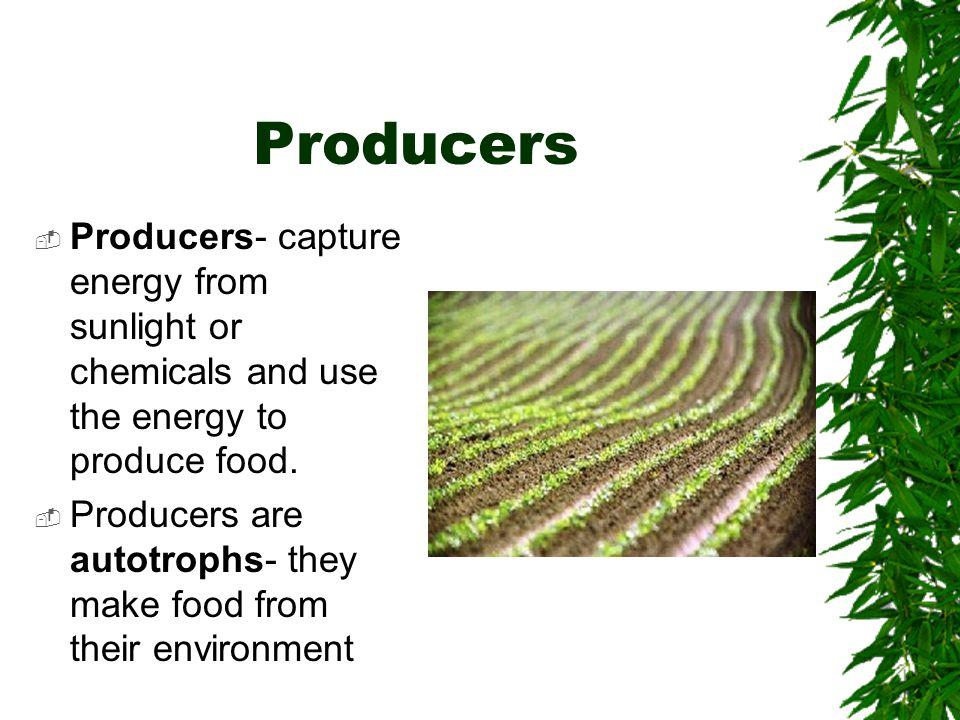 2 main types of autotrophs  One type gets energy from the sun-by photosynthesis  Another type gets energy without light- by chemosynthesis
