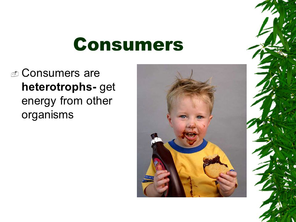 Types of Consumers  Herbivores- eat only plants  Carnivores- eat animals  Omnivores- eat both plants and animals  Detritivores- eat dead matter (plants and animals)