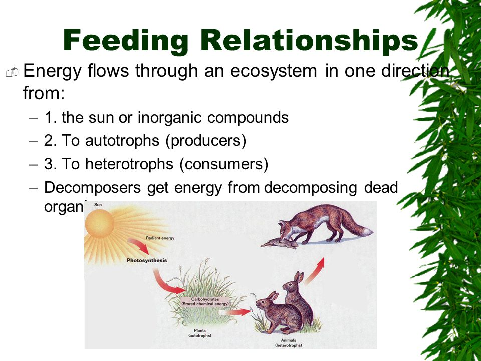 Food Web- A network of feeding relationships.
