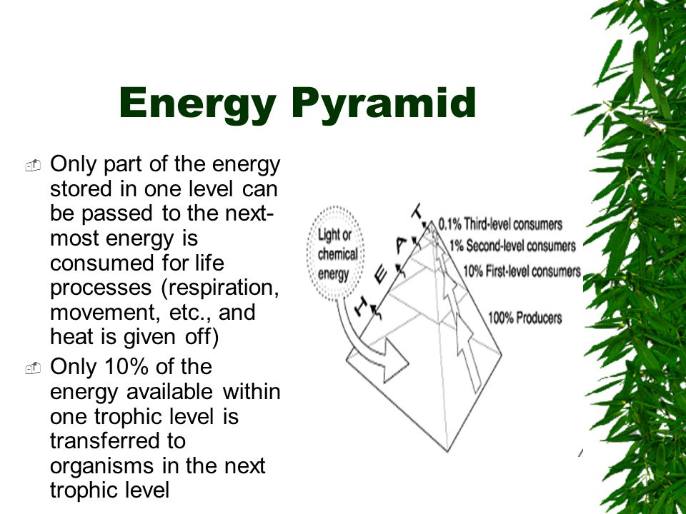 Biomass Pyramid  Biomass- the total amount of living tissue within a given trophic level.