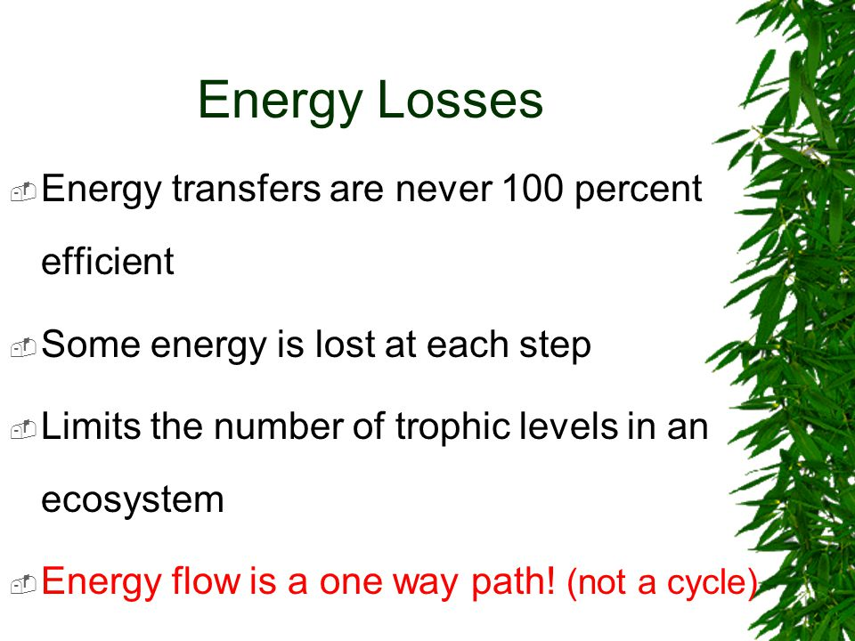 All Heat in the End  At each trophic level, the bulk of the energy received from the previous level is used in metabolism  This energy is released as heat energy and lost to the ecosystem  Eventually, all energy is released as heat