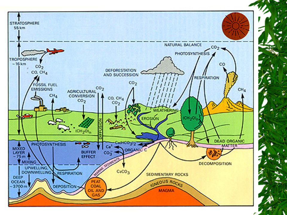 Carbon Cycle photosynthesis TERRESTRIAL ROCKS volcanic action weathering diffusion Bicarbonate, carbonate Marine food webs Marine Sediments Atmosphere Terrestrial Rocks Soil Water Peat, Fossil Fuels Land Food Webs
