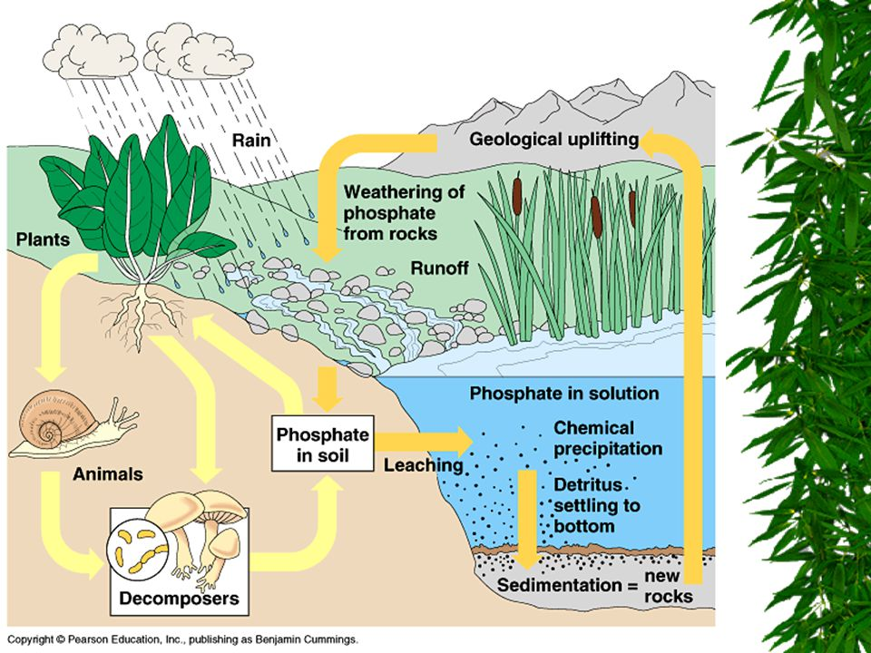 Communities & Biomes  Vocabulary to Know: –Limiting Factor –Succession  Primary  Secondary –Climax Community