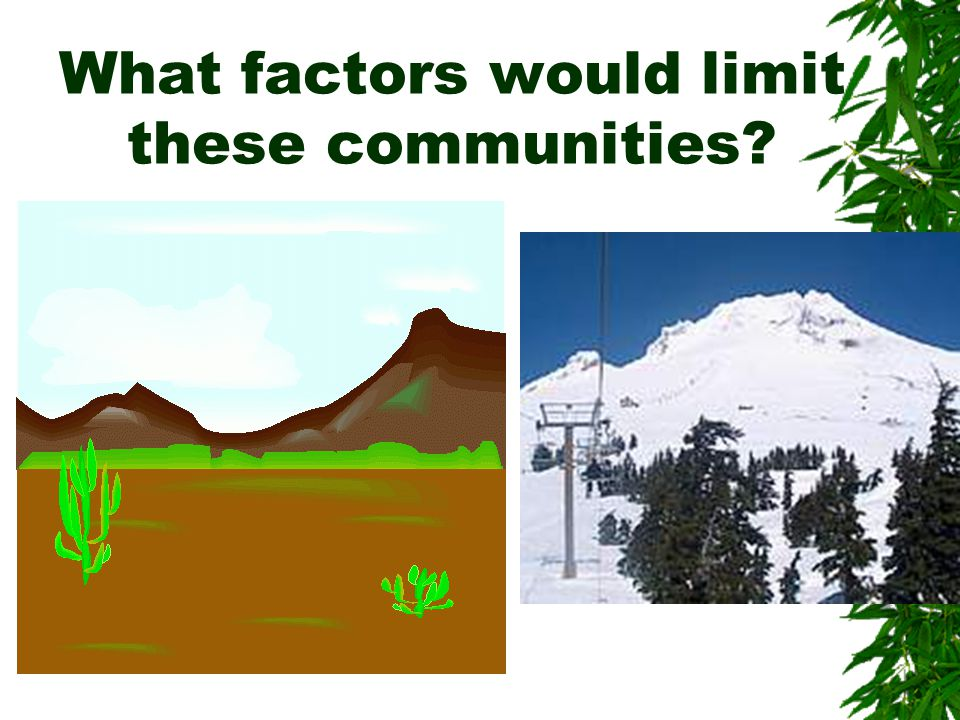 What is Succession & what causes it?  Changes to a community  Biotic Factor  Abiotic Factors