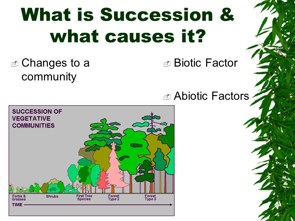 2 Types of succession  Primary –From nothing –Even the soil must be created  Secondary –From soil –Disaster can strike and make it start over