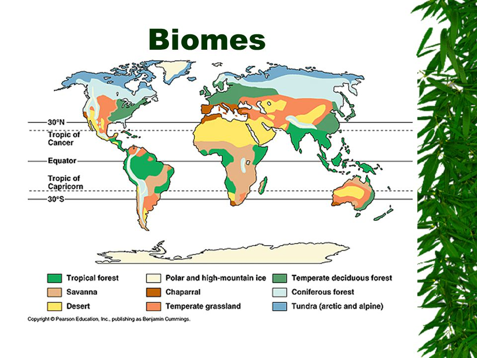 Biome Chart (to fill in during presentations) Create a Biome Table with the Following Columns: 1.