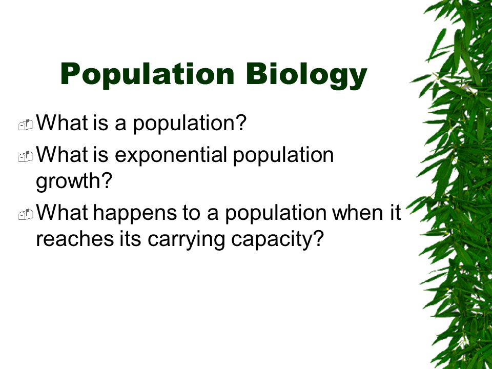 How many mice are in the following population? Estimate! ReadySET Go!