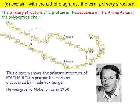 This diagram shows the primary structure of PIG INSULIN, a protein hormone as discovered by Frederick Sanger. He was given a Nobel prize in 1958. The primary.