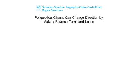 Polypeptide Chains Can Change Direction by Making Reverse Turns and Loops.