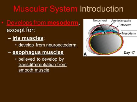 Muscular System Introduction