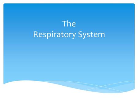 The Respiratory System.  Exchange gases between blood and lungs  Regulate body temp by cooling or warming blood  Maintain blood's electrolyte balance.
