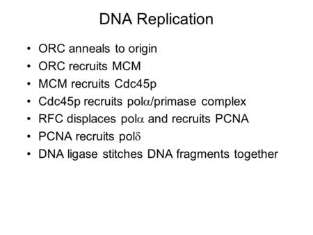 DNA Replication ORC anneals to origin ORC recruits MCM MCM recruits Cdc45p Cdc45p recruits pol  /primase complex RFC displaces pol  and recruits PCNA.